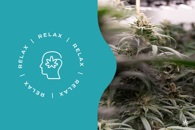 Could CBD be the key to mindfulness?